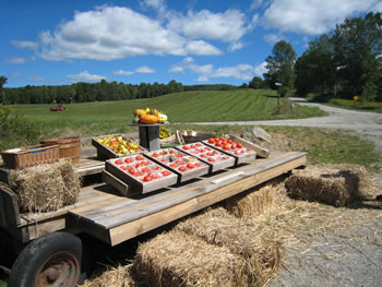 farm stand at Brown Boar Farm
